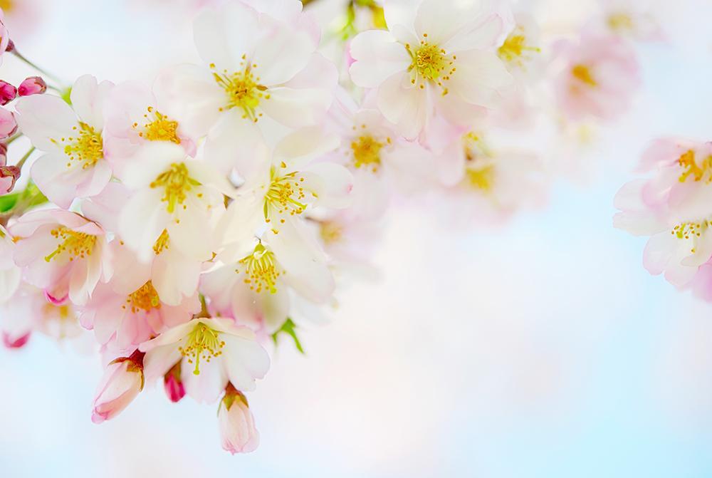 花在る世界のハッピー / フジナリ リョウ
