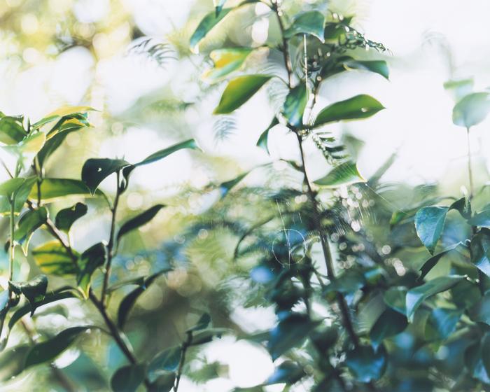 Green believer / Tomoe Hayakawa