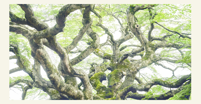 great growth / Ryuji Tokuda