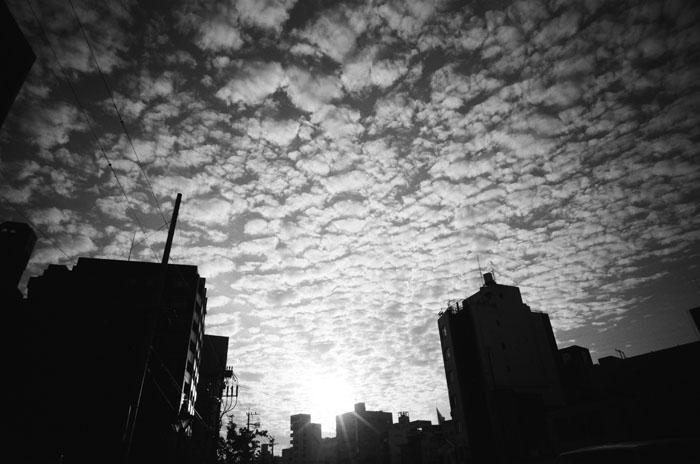 Praised Shadow / Yu Kamohara